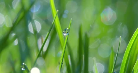 Dew-Drop-Macro-Shot-02