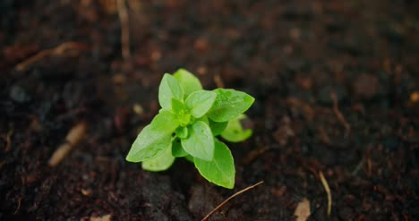 Young-Seedling-in-Soil