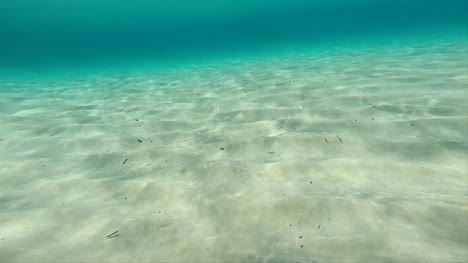 Swimming-Along-Seabed-POV-01