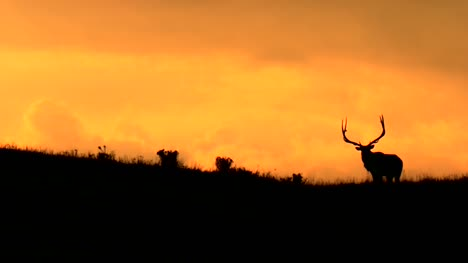 Stag-Silhouette-Against-Orange-Sunset