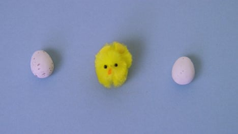 Easter-Chicks-Hatching
