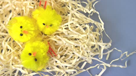Easter-Chicks-on-Straw-Focus-Pull