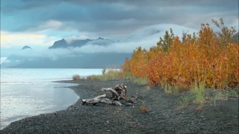 Autumnal-Leaves-on-Alaskan-Beach