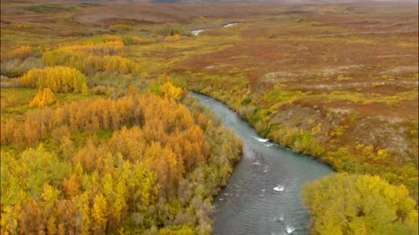 Aerial-Shot-of-Alaskan-Woodland