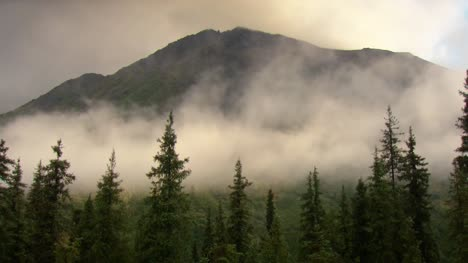 Misty-Forest-and-Mountain