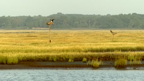 Birds-of-Prey-on-Perches-in-Grassy-Landscape