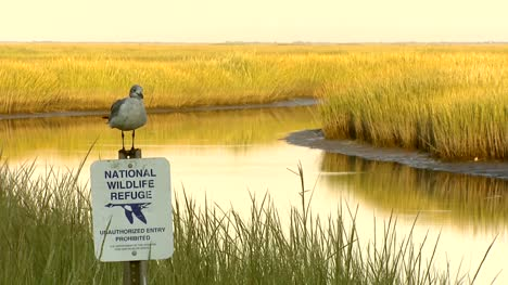 Bird-on-Wildlife-Reserve-Sign