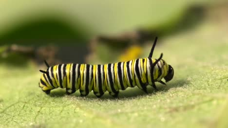 Caterpillar-On-A-Leaf