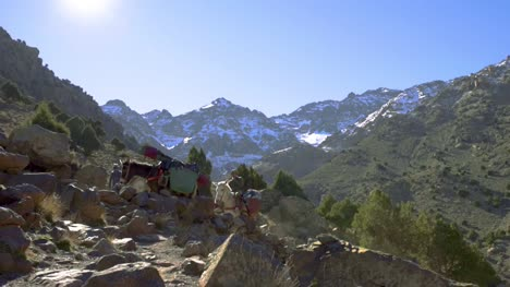 Pack-Mules-in-the-Mountains