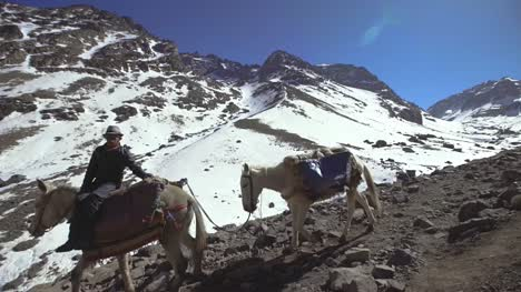 Man-with-Packhorses-on-Mountainside