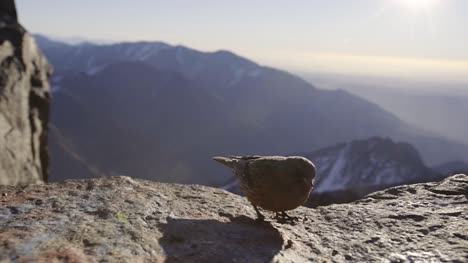 Small-Bird-on-Rocky-Ledge