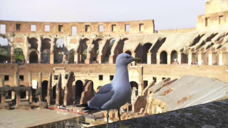 Seagull-Stood-On-Colosseum-Wall