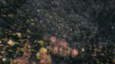 Flying-Over-Alpine-Forest