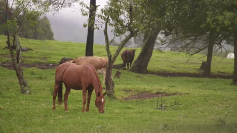 Horses-Grazing-In-Field
