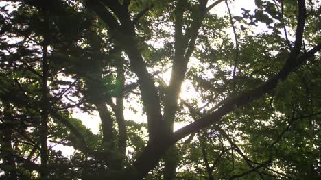 Sunlight-Shining-Through-Branches