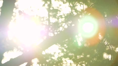 Sunlight-Through-Leaves-Lens-Flare