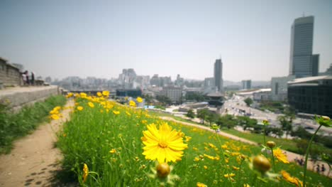 Yellow-Flowers-Against-Seoul-Backdrop