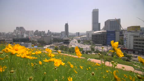 Yellow-Daisies-and-Seoul-City