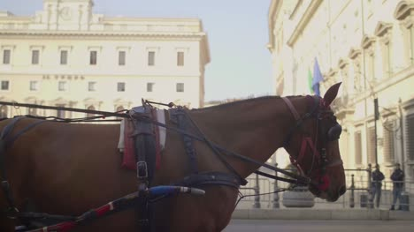 Horse-Pulling-Carriage-in-Rome