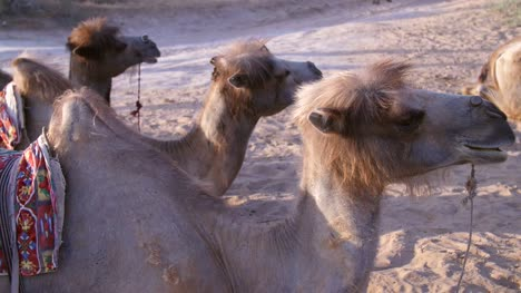 Camels-in-a-Row