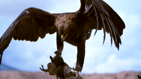 Eagle-Hunter-Holding-up-Eagle