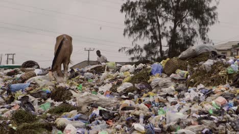 Horse-on-Rubbish-Pile-Nigeria-01