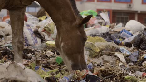 Horse-on-Rubbish-Pile-Nigeria-04