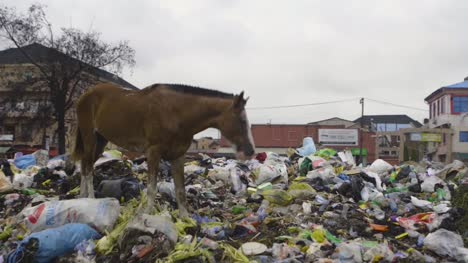 Horse-on-Rubbish-Pile-Nigeria-05