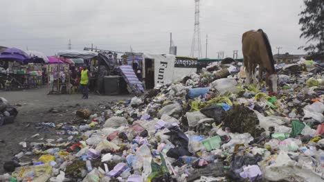 Horse-on-Rubbish-Pile-Nigeria-06