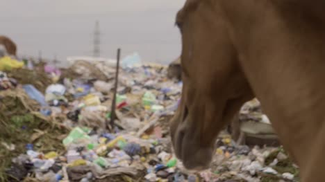 Horse-on-Rubbish-Pile-Nigeria-08