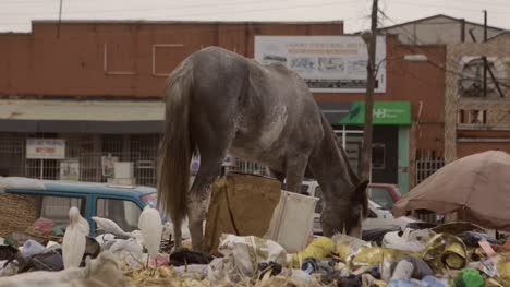 Horse-on-Rubbish-Pile-Nigeria-09