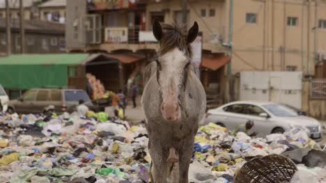 Horse-on-Rubbish-Pile-Nigeria-10