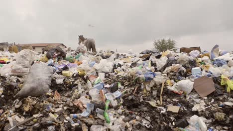 Horse-on-Rubbish-Pile-Nigeria-11