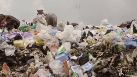 Horse-on-Rubbish-Pile-Nigeria-12