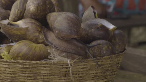 Giant-Snails-Nigeria-01