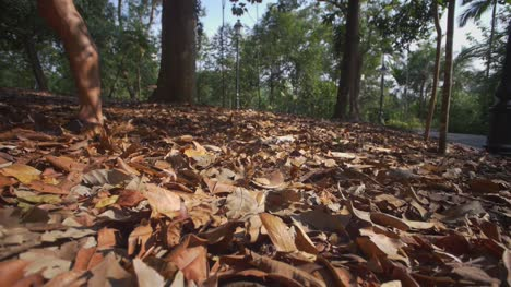 Autumn-Leaves-Singapore-03