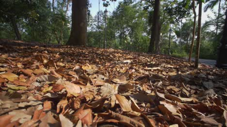 Autumn-Leaves-Singapore-04