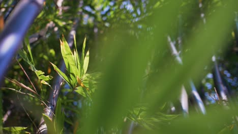 Bamboo-Leaves-in-the-Breeze