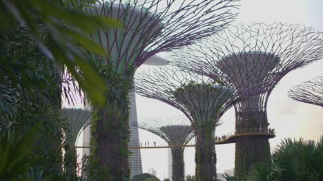 Supertrees-Singapore-01