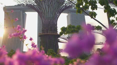 Supertrees-Singapore-03