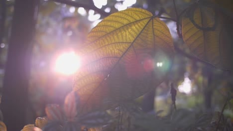 Tropical-Leaf-in-Sunlight-01