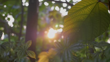 Tropical-Leaf-in-Sunlight-02