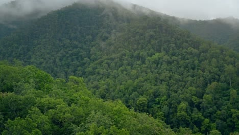 Mountainous-Jungle-Treetops