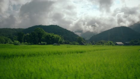 Rice-Paddy-Fields-in-Thailand