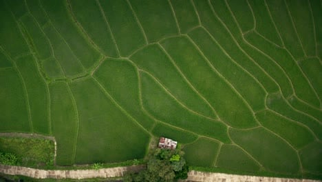 Rice-Paddies-From-Above