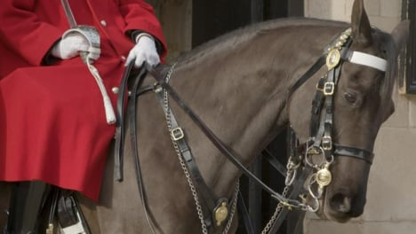 Close-up-of-Horse-Guard-on-Duty-At-Whitehall