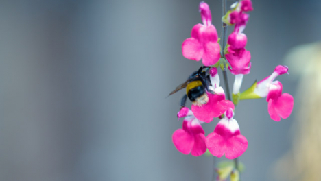 Bee-Pollinating-Garden-Flowers-Close-Up