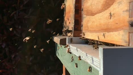 Bees-entering-and-exiting-bee-hive-in-slow-motion