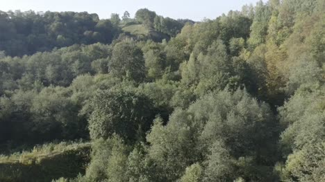 forest-from-a-bird-s-eye-view