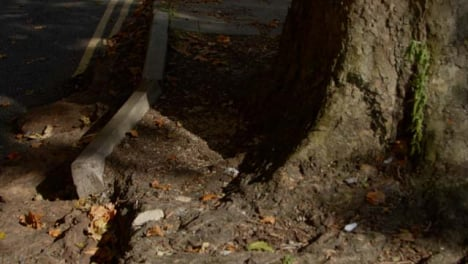 Tracking-Shot-of-Tree-Roots-Dislodging-Roadside-Curb